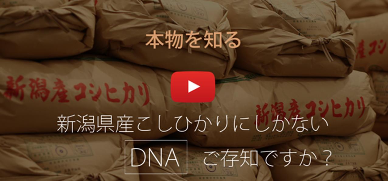本物を知る 新潟産こしひかりにしかないDNAご存知ですか?