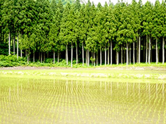 魚沼市(十日町、大和、塩沢エリア)