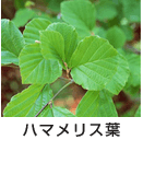ハマメリス葉