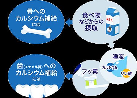 骨へのカルシウム補給には 歯(エナメル質)へのカルシウム補給には
