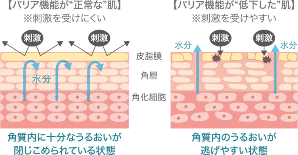 """バリア機能が""""正常な""""肌※刺激を受けにくい バリア機能が""""低下した""""肌※刺激を受けやすい"""