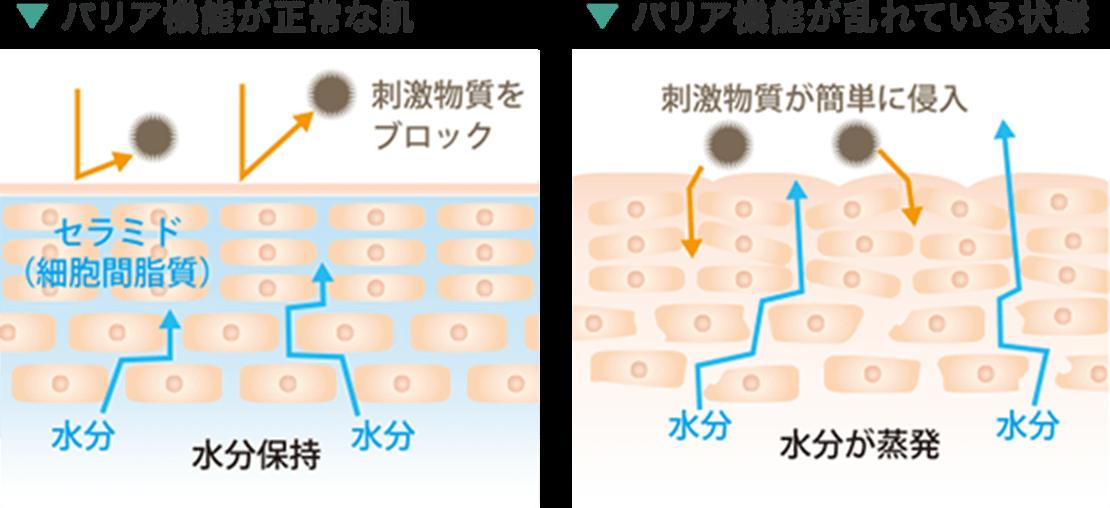 バリア機能が正常な肌 バリア機能が乱れている状態