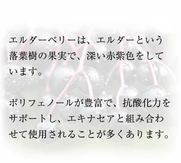 エルダーベリーは、エルダーという 落葉樹の果実で、深い赤紫色をしています。  ポリフェノールが豊富で、抗酸化力をサポートし、エキナセアと組み合わせて使用されることが多くあります。