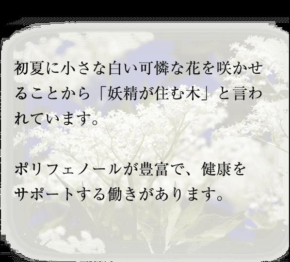 初夏に小さな白い可憐な花を咲かせることから「妖精が住む木」と言われています。  ポリフェノールが豊富で、健康を サポートする働きがあります。