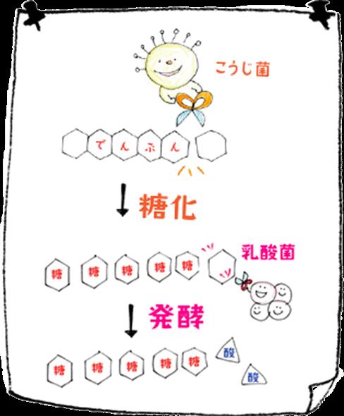 乳酸発酵の図