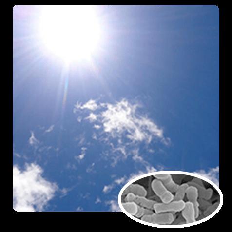 画像イメージ
