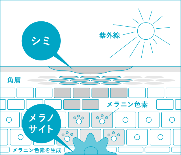 「保湿」と「シミ対策」のWのアプローチイメージ図