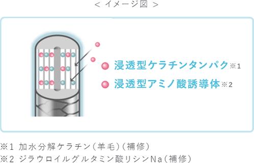 イメージ図 浸透型ケラチンタンパク※1 浸透型アミノ酸誘導体※2 ※1加水分解ケラチン(羊毛)(補修) ※2ジラウロイルグルタミン酸リシンNa(補修)