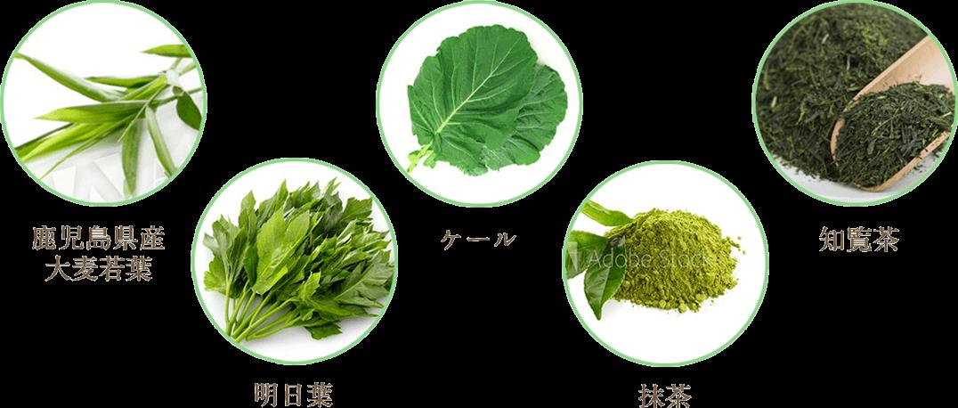 鹿児島県産大麦若葉、明日葉、ケール、抹茶、知覧茶