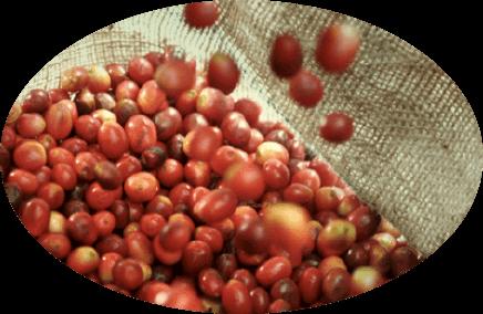 「こだわりの厳選豆」コーヒー豆イメージ