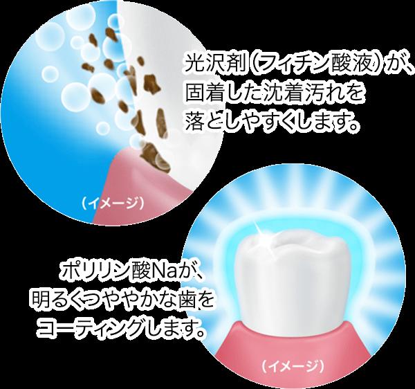 光沢剤(フィチン酸液)が、固着した沈着汚れを落としやすくします。ポリリン酸Naが、明るくつややかな歯をコーティングします。