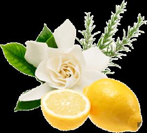 ベルガモット果皮油、レモン果皮油、セイヨウハッカ油、ローズマリー葉油のイメージ画像