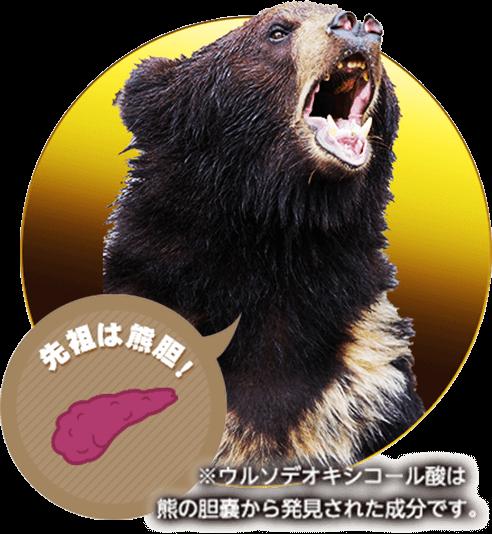 先祖は熊胆!※ウルソデオキシコール酸は熊の胆嚢から発見された成分です。