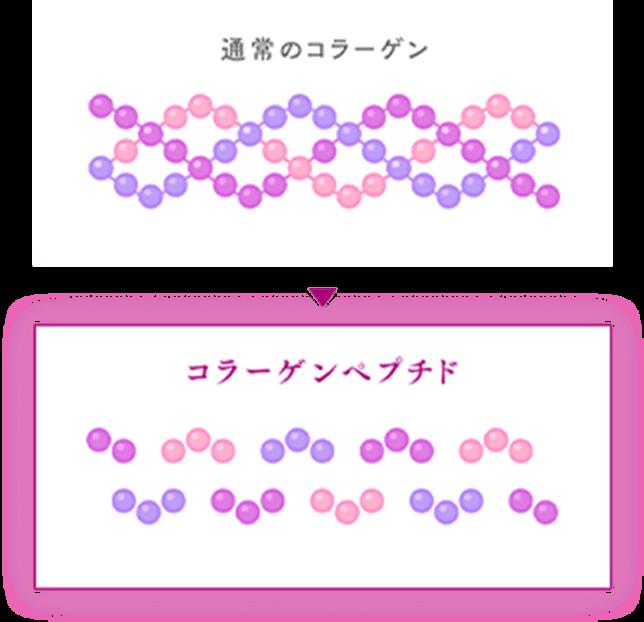 通常のコラーゲンとコラーゲンペプチドの比較イメージ図