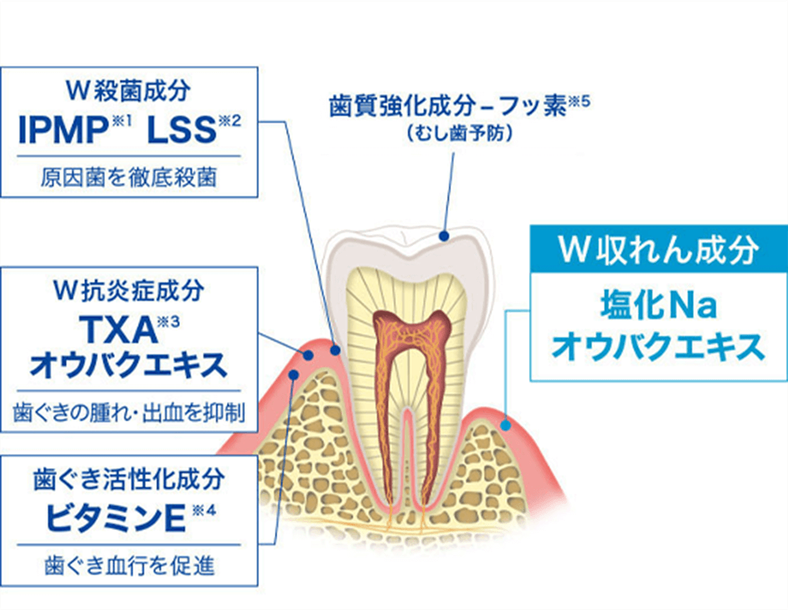 W収れん作用 歯ぐきひきしめイメージ