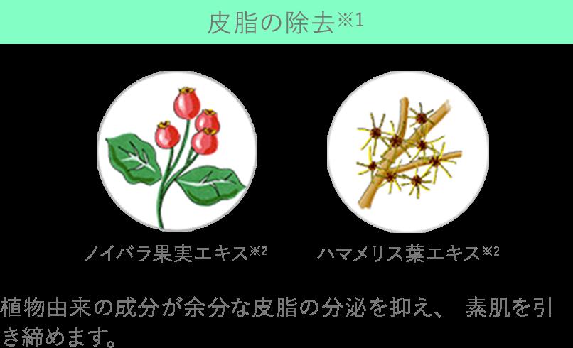 皮脂の除去※1 ノイバラ果実エキス※2 ハマメリス葉エキス※2 植物由来の成分が余分な皮脂の分泌を抑え、 素肌を引き締めます。