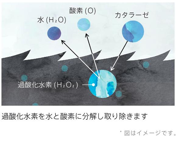 カタラーゼの効果イメージ図