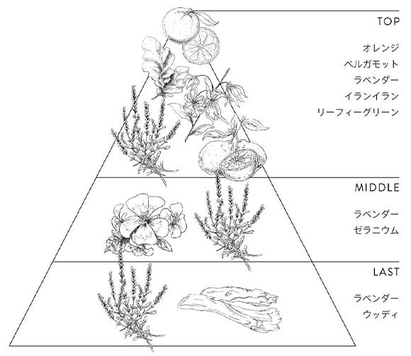 香りのイメージ図
