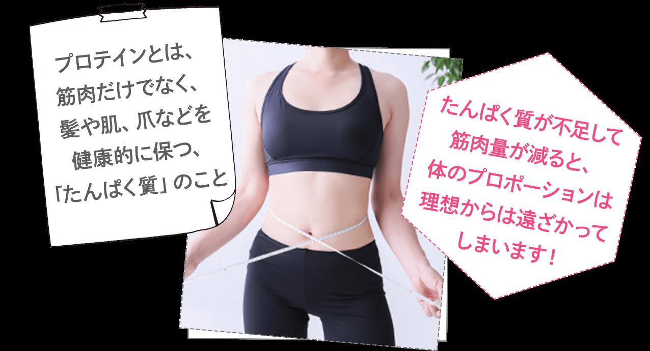プロテインとは、筋肉だけでなく、髪や肌、爪などを健康的に保つ、「たんぱく質」のこと。たんぱく質が不足して筋肉量が減ると、体のプロポーションは理想からは遠ざかってしまいます!