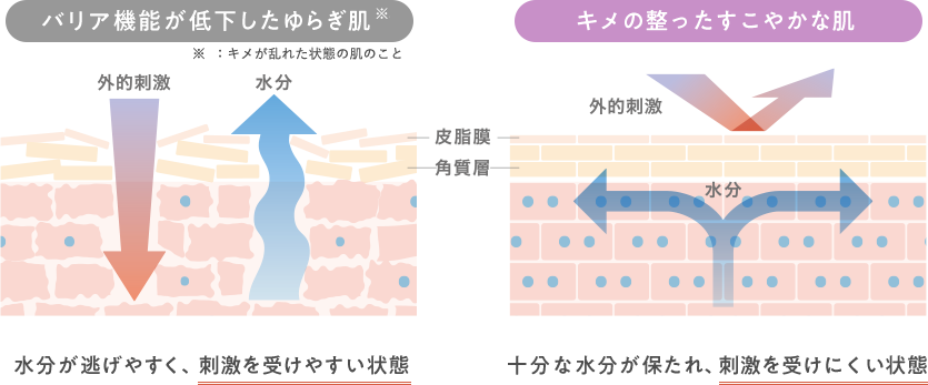 バリア機能が低下したゆらぎ肌:キメの整ったすこやかな肌