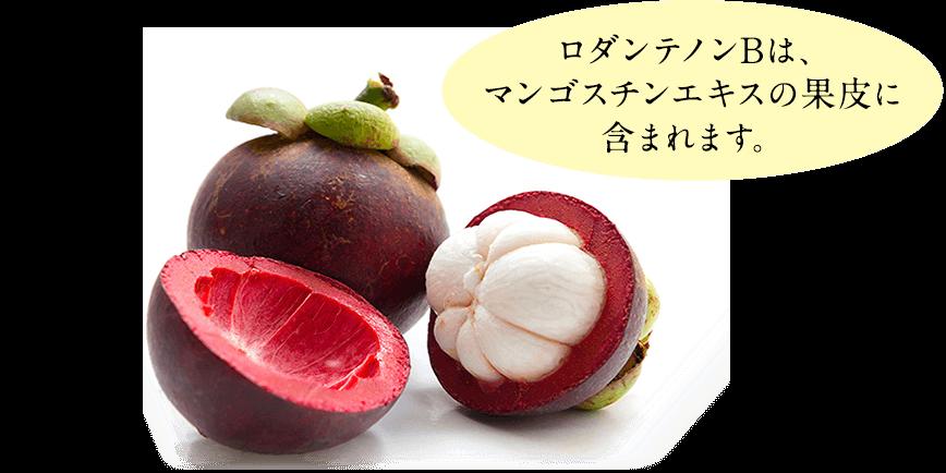 ロダンテノンBは、 マンゴスチンエキスの果皮に 含まれます。