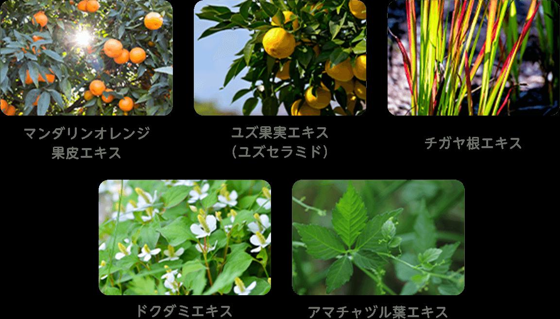 マンダリンオレンジ 果皮エキス、ユズ果実エキス (ユズセラミド)、チガヤ根エキス、ドクダミエキス、アマチャヅル葉エキス
