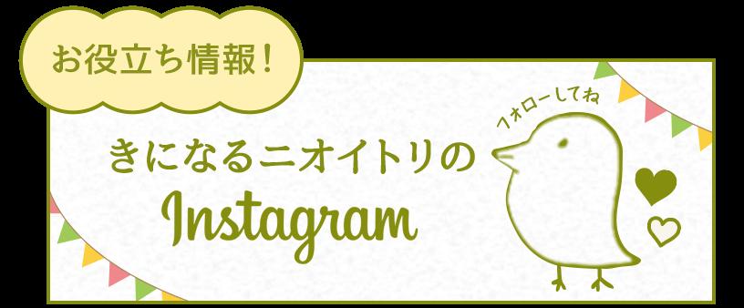 お役立ち情報!きになるニオイトリのinstagram
