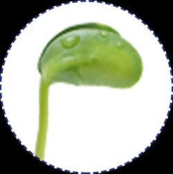 ダイズ芽エキス イメージ