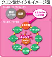 クエン酸サイクルイメージ図