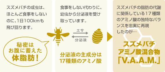 スズメバチの成虫は、ほとんど食事をしないのに、1日100kmも飛び回ります。食事をしない代わりに、幼虫から分泌液を受け取っています。スズメバチの脂肪の代謝に関係している17種類のアミノ酸の独特なバランスを忠実に再現したのが