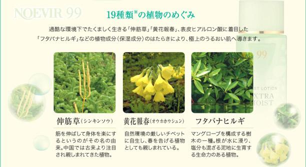 19種類の植物のめぐみ