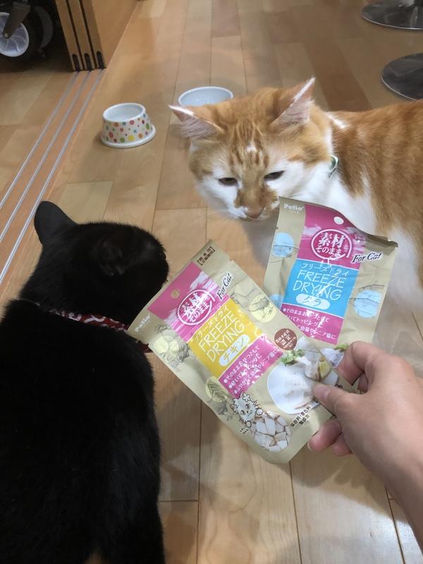 素材そのまま フリーズドライ For Cat 2種12袋
