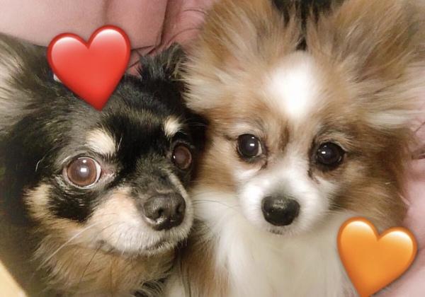 JPスタイル 和の究み トータルボディケア 11歳以上のシニア犬用 3.6kg