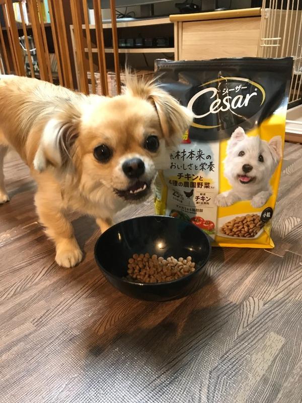 シーザードライ 成犬用 チキンと4種の農園野菜入り 超小粒/小粒