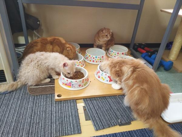アイムス™ キャットフード 成猫用 インドアキャット チキン 1.5kg
