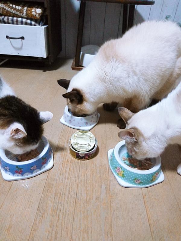 デビフ シニア猫用セット