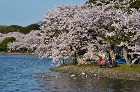 桜も話も花が咲く