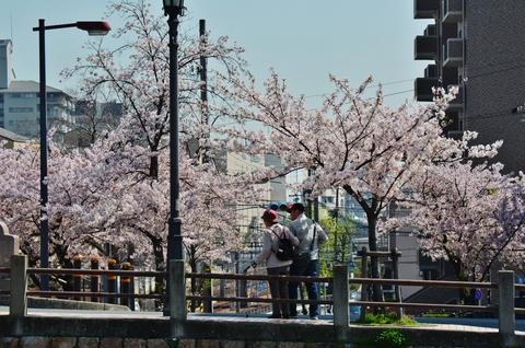 桜に誘われデート