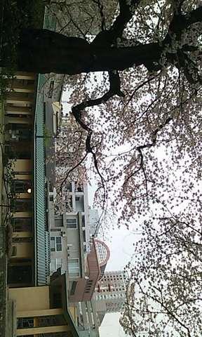 ひっそりと咲き誇る桜と大正からの建造物