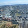 茨城県庁から見下ろす桜