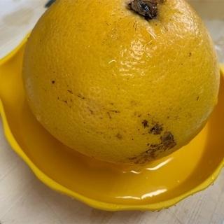 「ののじ グレフル種取物語」すっごく便利!これがあるなら柑橘類を毎日でも食べたい